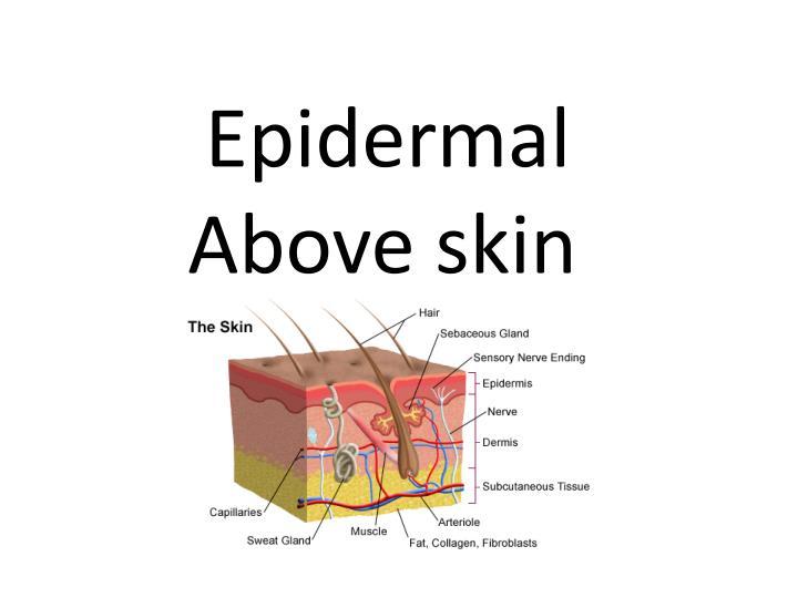 Epidermal