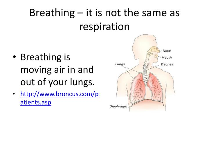 Breathing – it is not the same as respiration