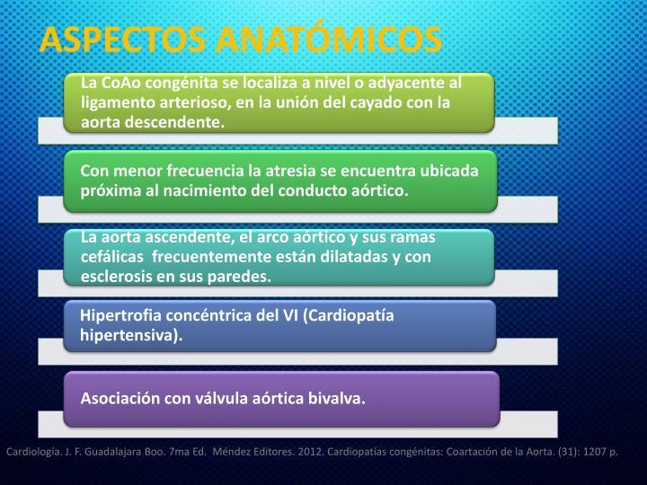 ASPECTOS ANATÓMICOS