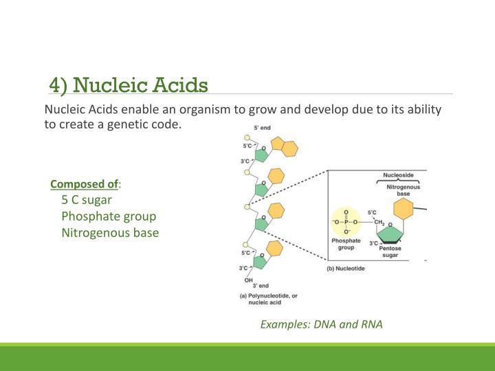 4) Nucleic Acids