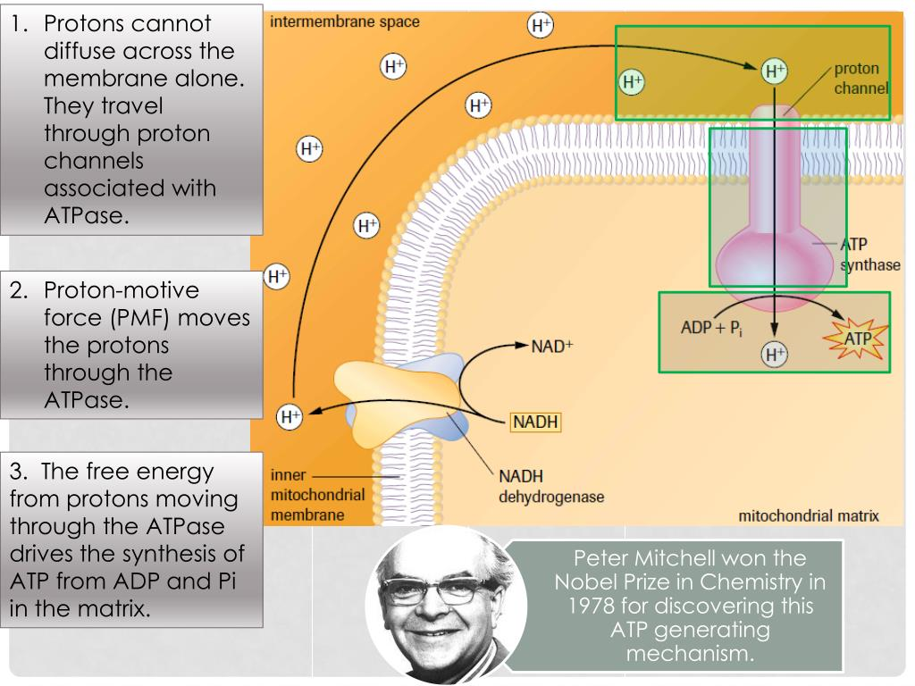 Battery Circuit Description Http Www Solarsam Com D Links Battery