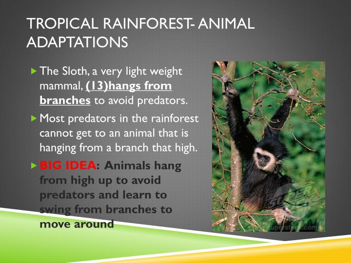 Tropical rainforest- Animal Adaptations