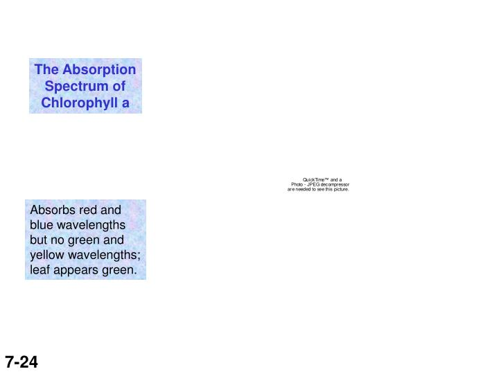 The Absorption