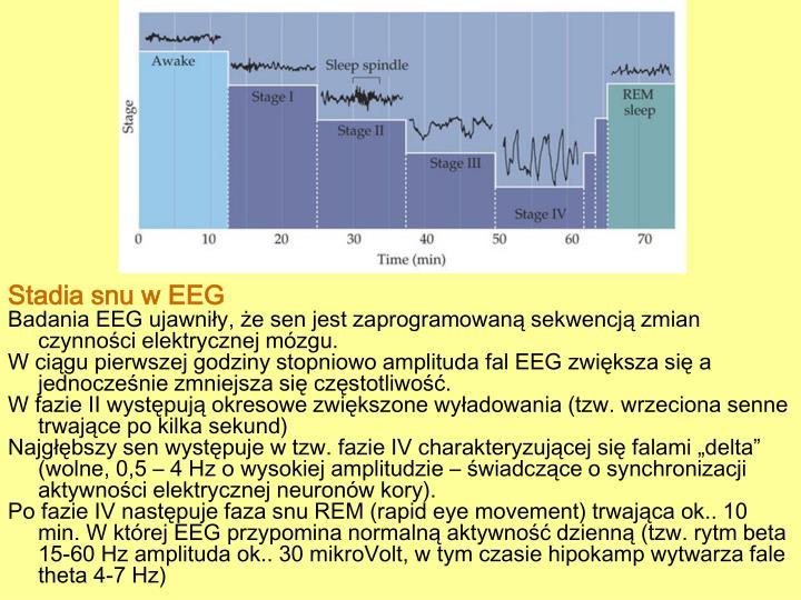 Stadia snu w EEG