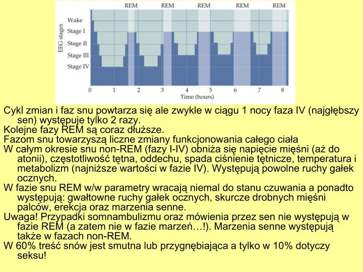 Cykl zmian i faz snu powtarza się ale zwykle w ciągu 1 nocy faza IV (najgłębszy sen) występuje tylko 2 razy.