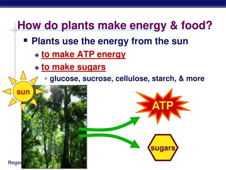 How do plants make energy food