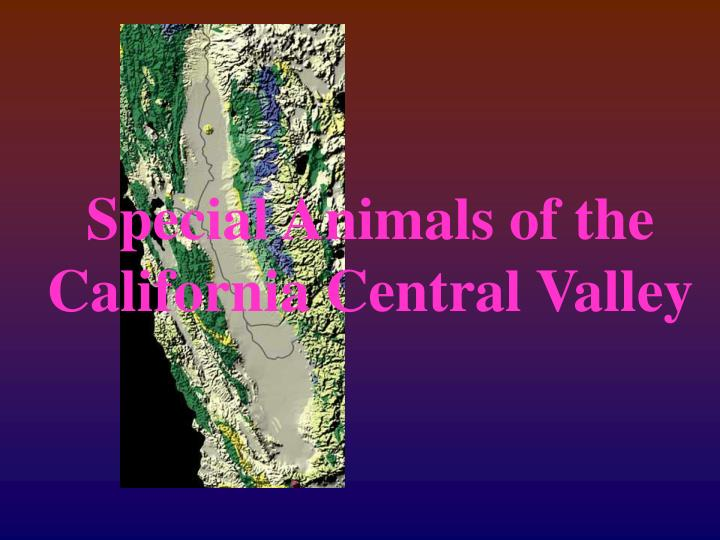 special animals of the california central valley n.