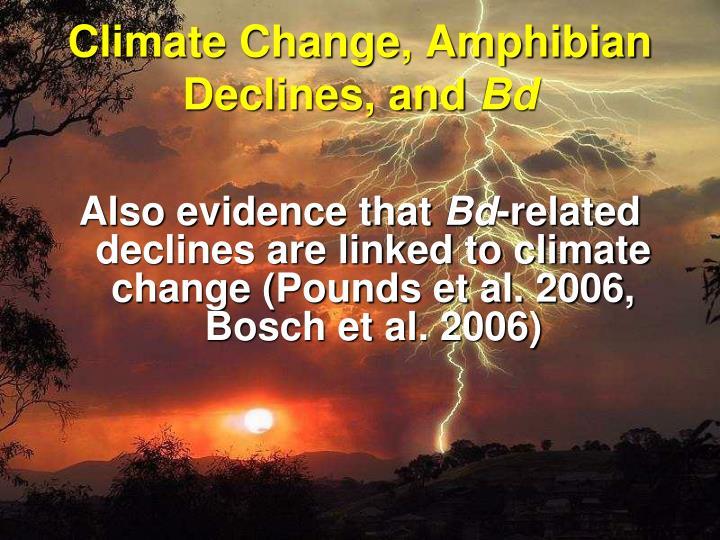Climate change amphibian declines and bd