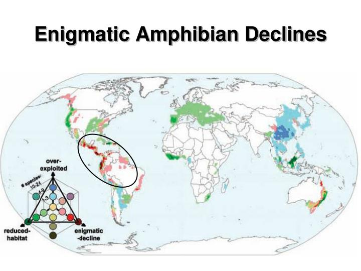 Enigmatic Amphibian Declines