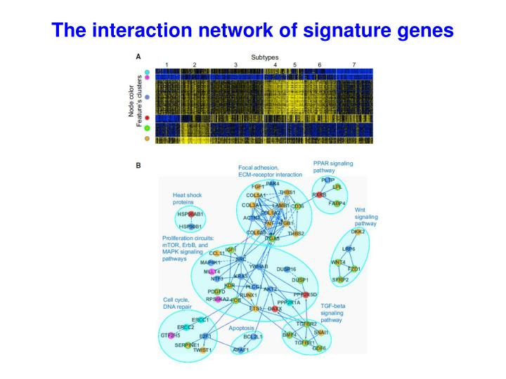 The interaction network of signature genes