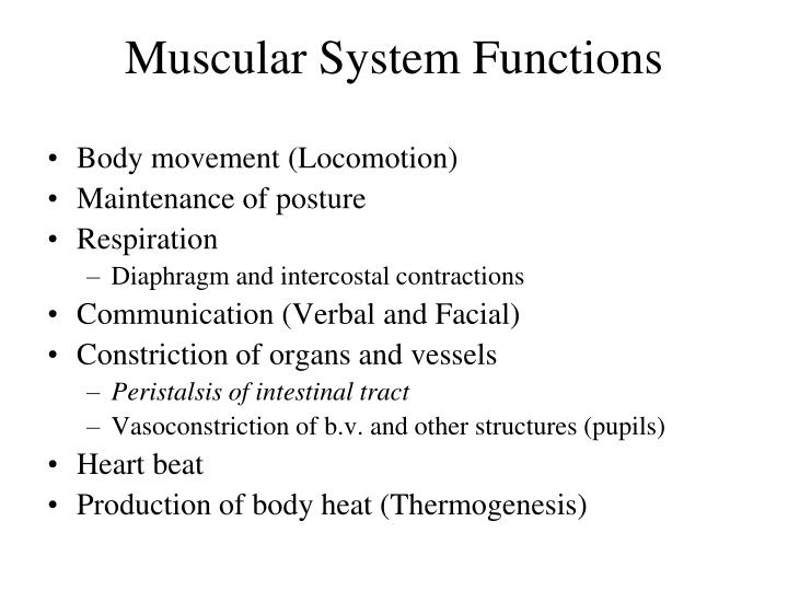 Ppt Smooth Muscle Physiology Powerpoint Presentation Id3198388