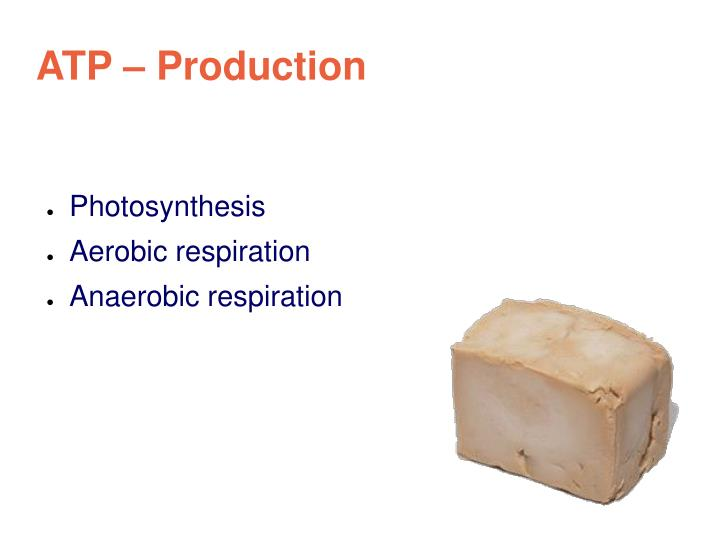ATP – Production