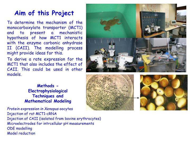 Aim of this Project