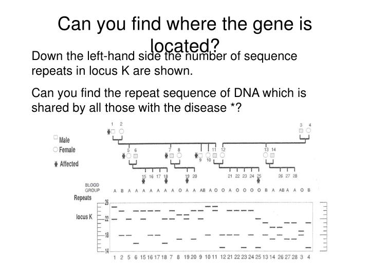 Can you find where the gene is located?
