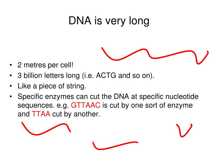DNA is very long