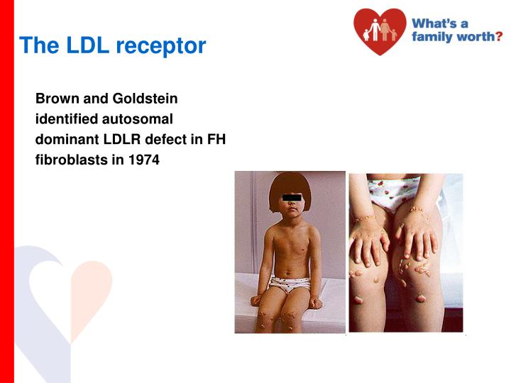 The LDL receptor