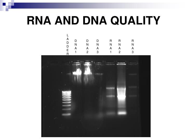 RNA AND DNA QUALITY