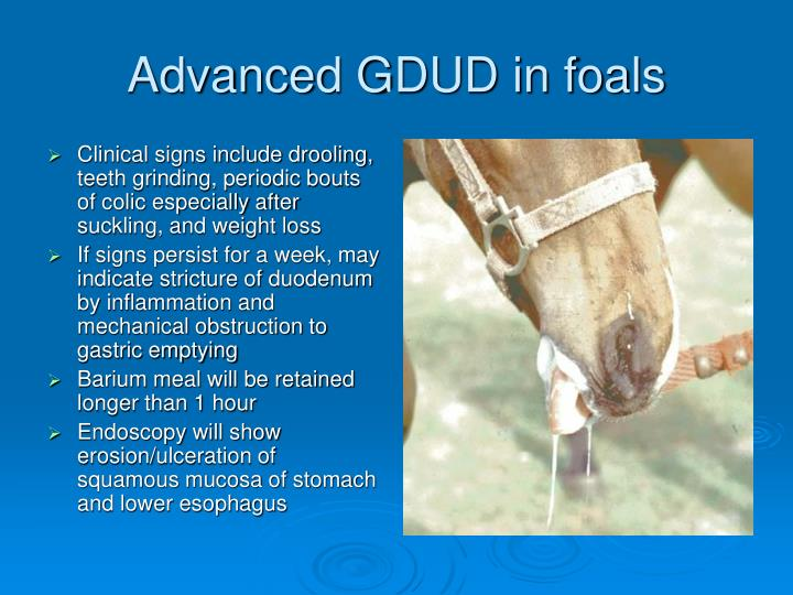 Clinical signs include drooling, teeth grinding, periodic bouts of colic especially after suckling, and weight loss