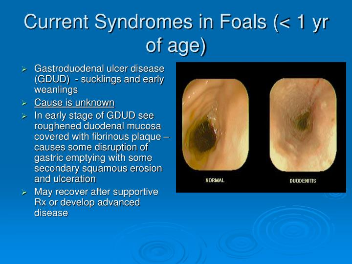 Current Syndromes in Foals (< 1 yr of age)