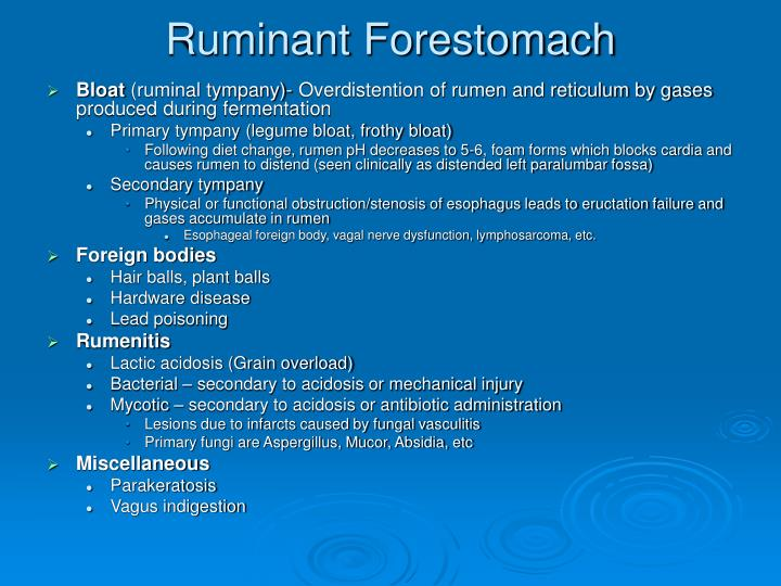 Ruminant Forestomach