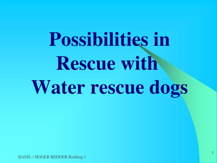 possibilities in rescue with water rescue dogs n.