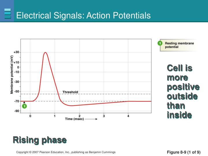 Electrical Signals: Action Potentials