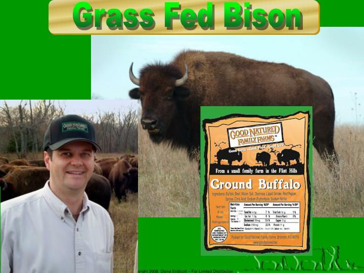 Grass Fed Bison