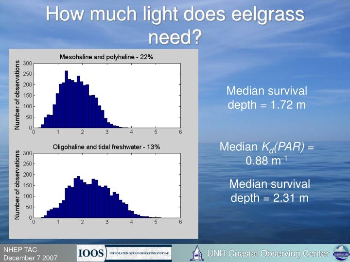 How much light does eelgrass need?