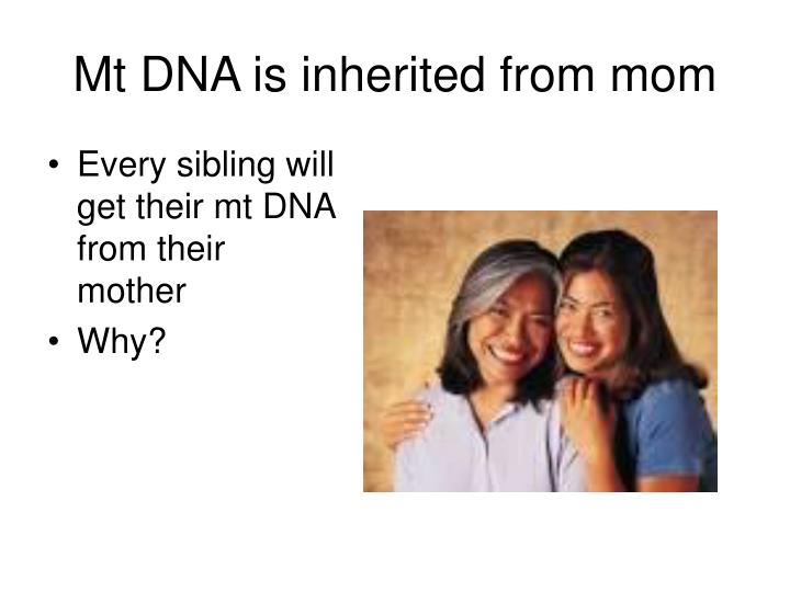 Mt DNA is inherited from mom