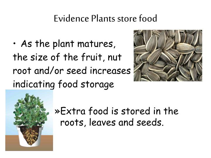 Evidence Plants store food