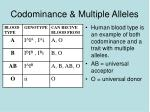 codominance multiple alleles1