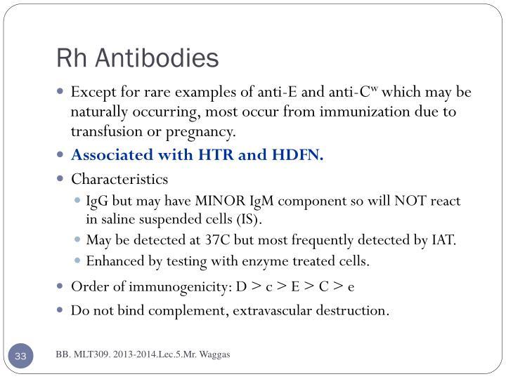 Rh Antibodies