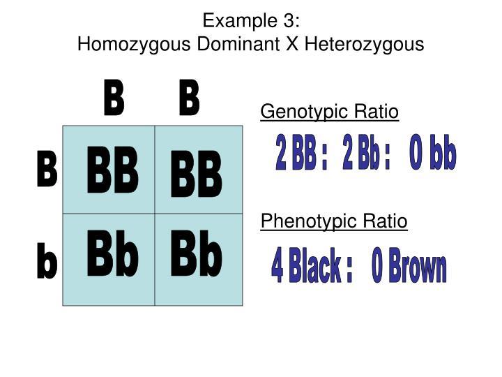 PPT - Genetics Unit PowerPoint Presentation - ID:3210719