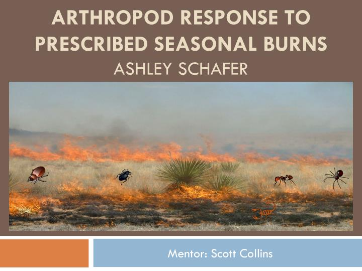 Arthropod response to prescribed seasonal burns ashley schafer