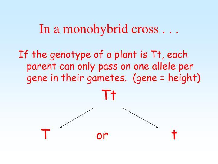 In a monohybrid cross . . .