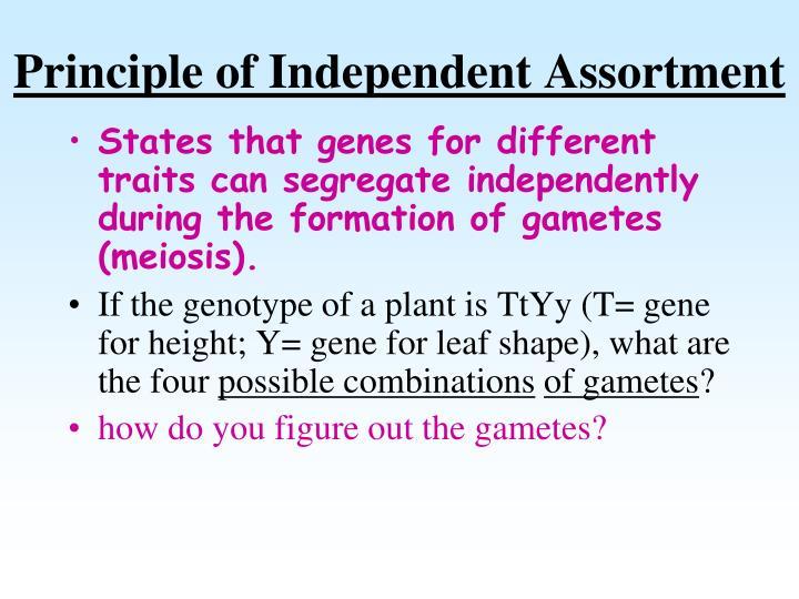 Principle of Independent Assortment