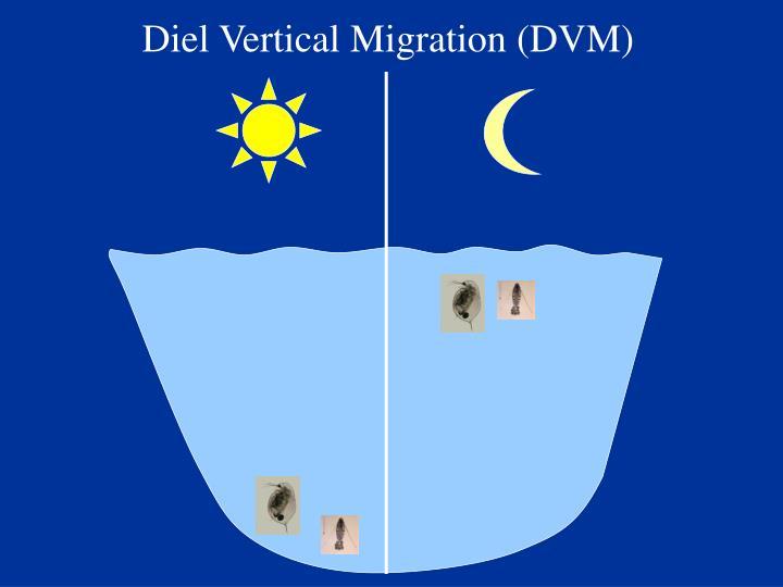 Diel Vertical Migration (DVM)