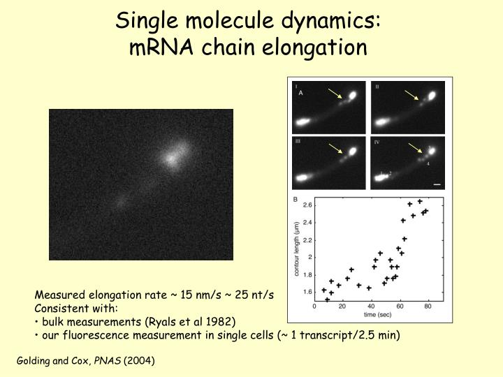 Single molecule dynamics: