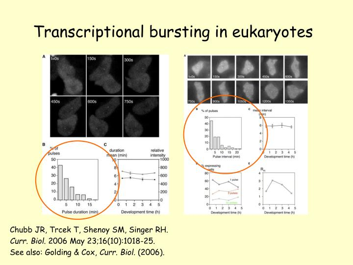Transcriptional bursting in eukaryotes