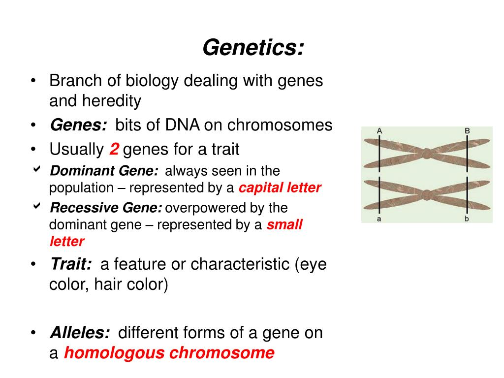 Ppt Genetics Powerpoint Presentation Id3216319