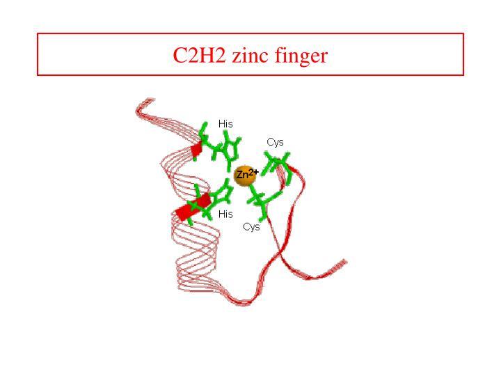 C2H2 zinc finger