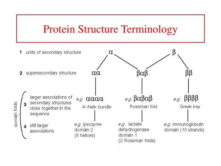 Protein Structure Terminology