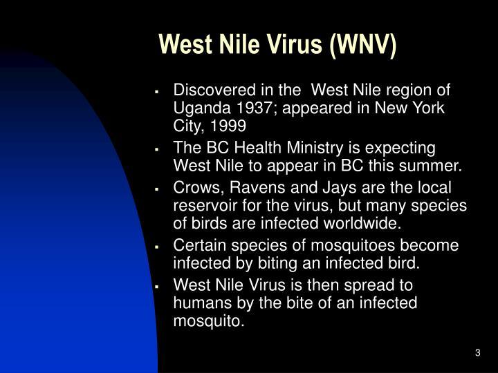 West nile virus wnv