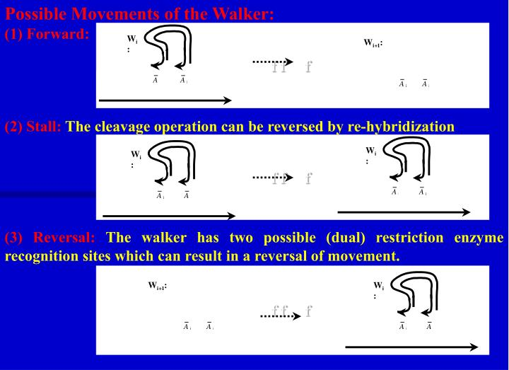 Possible Movements of the Walker: