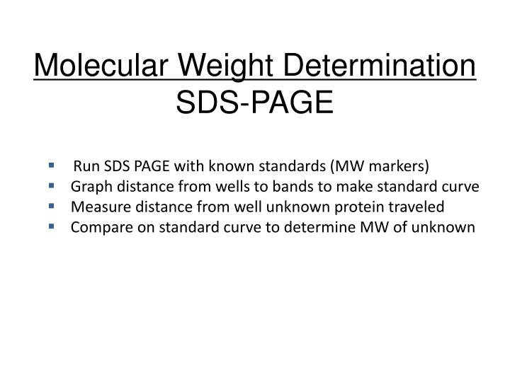 sds page standard curve