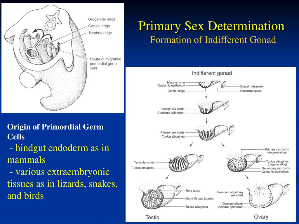 sex determination and sex differentiation in fish an overview of genetic in Columbus