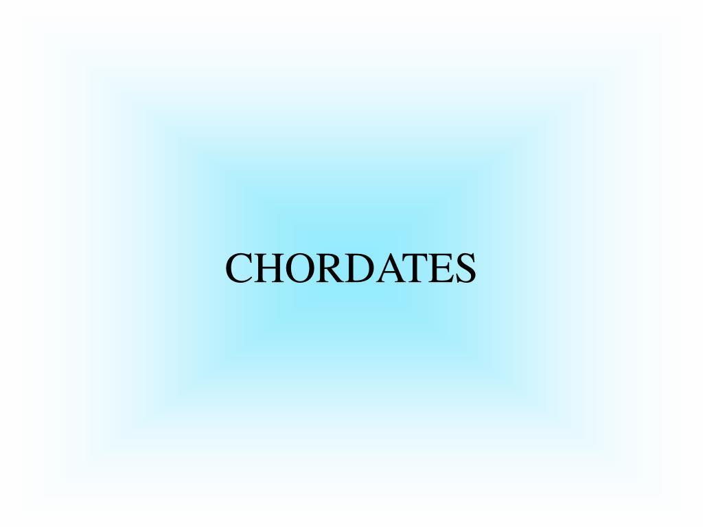PPT - Nonvertebrate Chordates, Fishes, and Amphibians ...