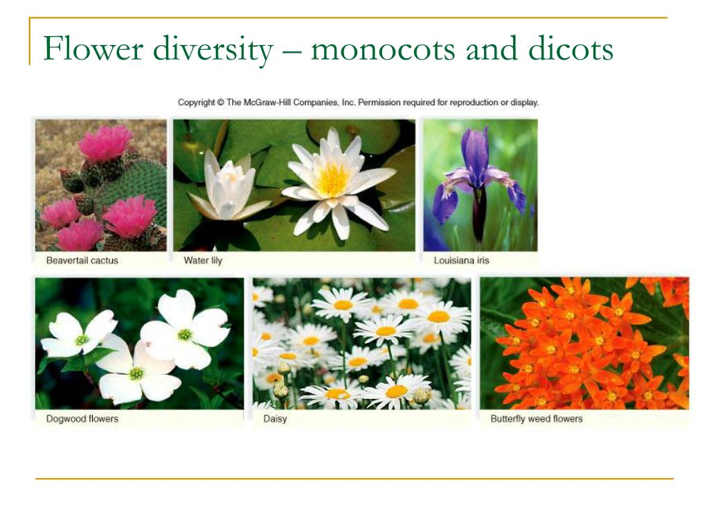 Ppt Chapter 24 Evolution And Diversity Of Plants Powerpoint Presentation Id 3224010