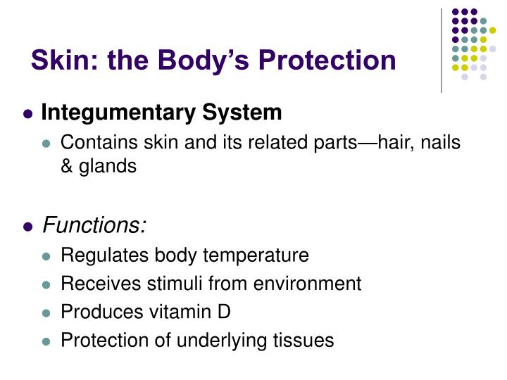 Skin the body s protection