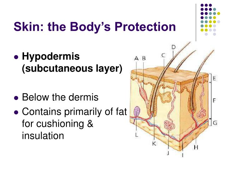 Skin: the Body's Protection
